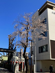 2021.3.23桜002