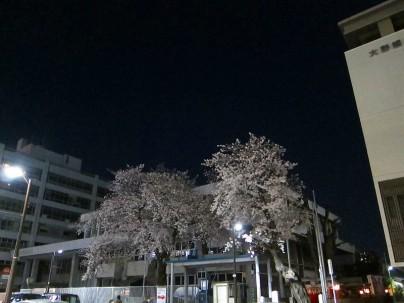 2021.3.26桜005