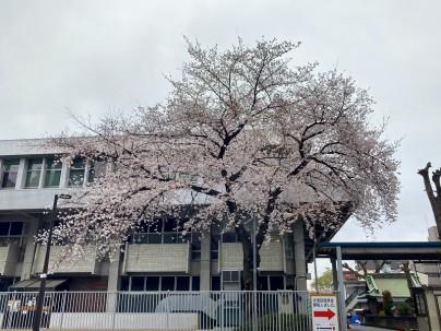 2021.3.25桜001