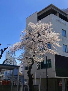 2021.3.29桜002