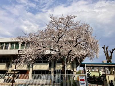 2021.3.26桜001
